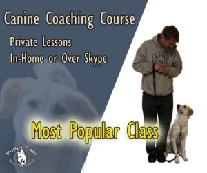 Canine Coaching Course - Private Dog Training